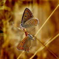 the butterfly by recepgulec