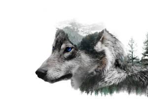-- Wolf exposure -- by 0l-Fox-l0