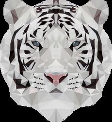 -- White tiger -- by 0l-Fox-l0
