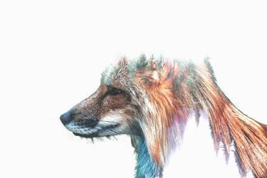 -- High fox -- by 0l-Fox-l0