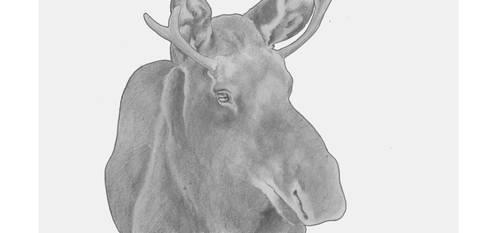 Moose by icagic