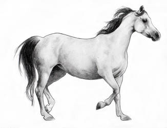 Horse by icagic