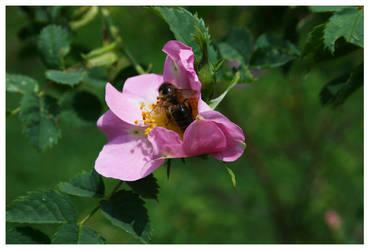 Bee2 by Kaszydlo