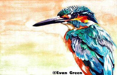 Kingfisher by greenbarbarian