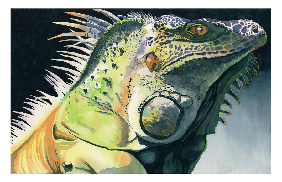 Iguana by greenbarbarian