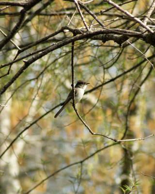 Bird in the tree by LovingInTheLongGrass