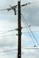 Birds, on Wires by LovingInTheLongGrass