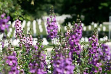 Memorial Day at Arlington by LovingInTheLongGrass