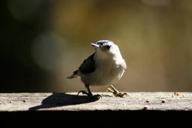 Bird's Eye by LovingInTheLongGrass