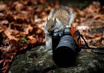 fluffy photographer by YuriBonder