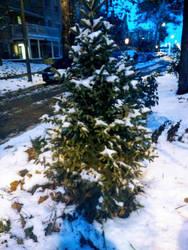 A snowy little tree in my neighborhood by Blaria95