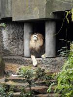 Biggg Lion by Mouselemur