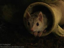 Darkling by Mouselemur