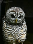 Confessions of a Slightly Neurotic Owl by Mouselemur