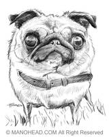 Pug by manohead