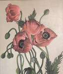 Poppies by bcarroll