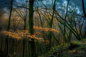 woodland by Nikoletta-Kolozs