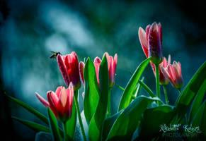 springtime by Nikoletta-Kolozs