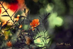... by Nikoletta-Kolozs