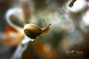 snail by Nikoletta-Kolozs