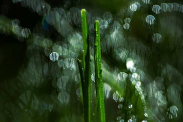 two grasses by Nikoletta-Kolozs