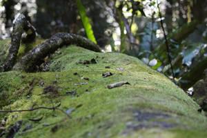 Forest/Moss 1 by xxMysteryStockxx