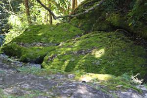 Mossy rock/forest by xxMysteryStockxx