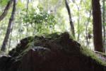 Rock/forest Edge stock by xxMysteryStockxx