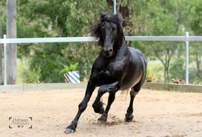 Friesian Stallion stock 9 by xxMysteryStockxx