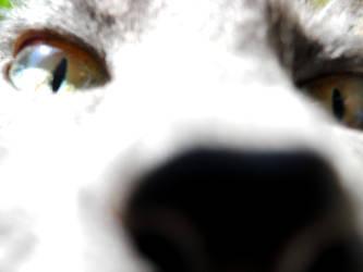 Meow by Azulcat