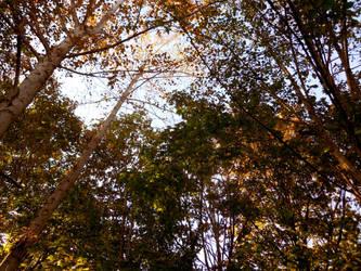 Fall Tree Colors by Azulcat