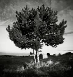an Istrian lendscapeIV... by Kaarmen
