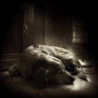 sweet dreams... by Kaarmen
