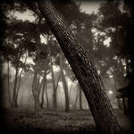 'songs from the wood ...'II by Kaarmen