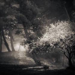 wonderful nature by Kaarmen