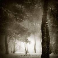 Winter by Kaarmen