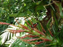 Mariposa negra con rojo-naranja by LunaNegra1949