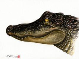 Alligator by rchaem