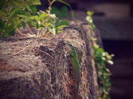 Lizard by XFak7oR