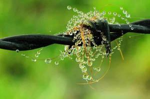 Poil eau fer by scubapic