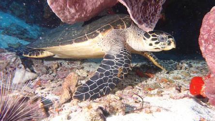 Le som' de la tortue by scubapic