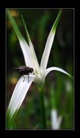 fly by zumbooruk
