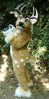 spotted deer now with VIDEO by LilleahWest