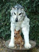 pale wolf quadsuit and dog by LilleahWest