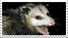 opossum stamp by milodogs