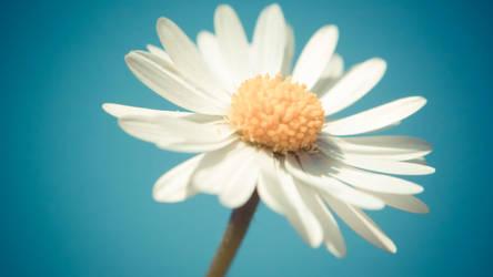 Minimalistic Retro Flower by daenuprobst