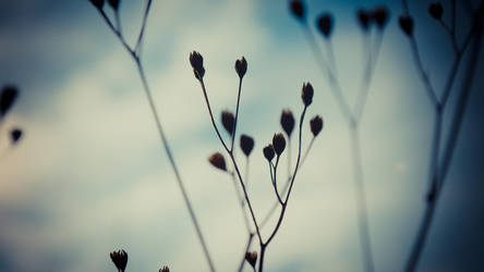 Blue Autumn by daenuprobst