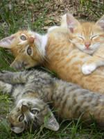 Kitty Pile by Megankorey