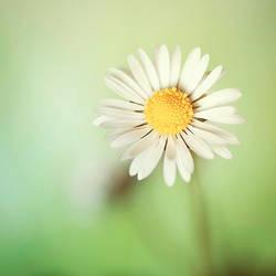 Like a sunny day by Invi-Light