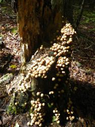 Tree Stump by Krymsan